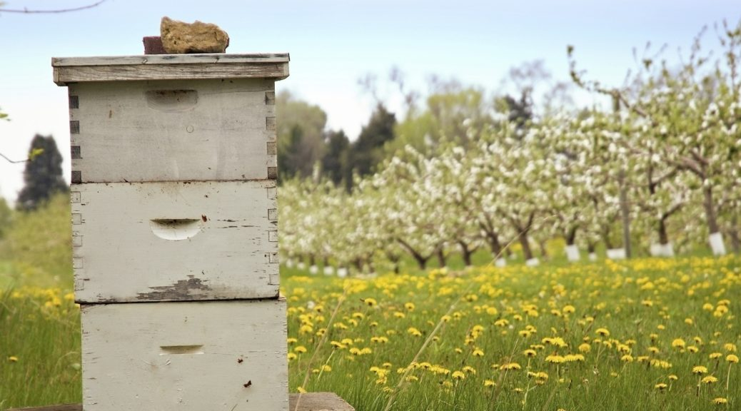 venta de colmenas de abejas